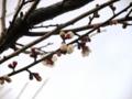 2012/02/28/ウメ2