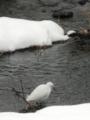 2012/02/29/コサギ