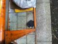 2012/03/12/手袋