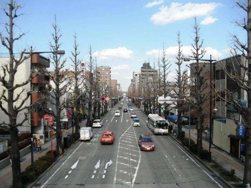 2012/03/14/イチョウ並木