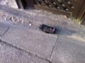 2012/03/21/手袋1