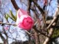 2012/04/02/ウメ2