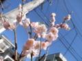 2012/04/04/ウメ1