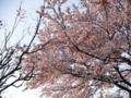 2012/04/12/サクラ