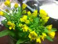 2012/04/13/野菜