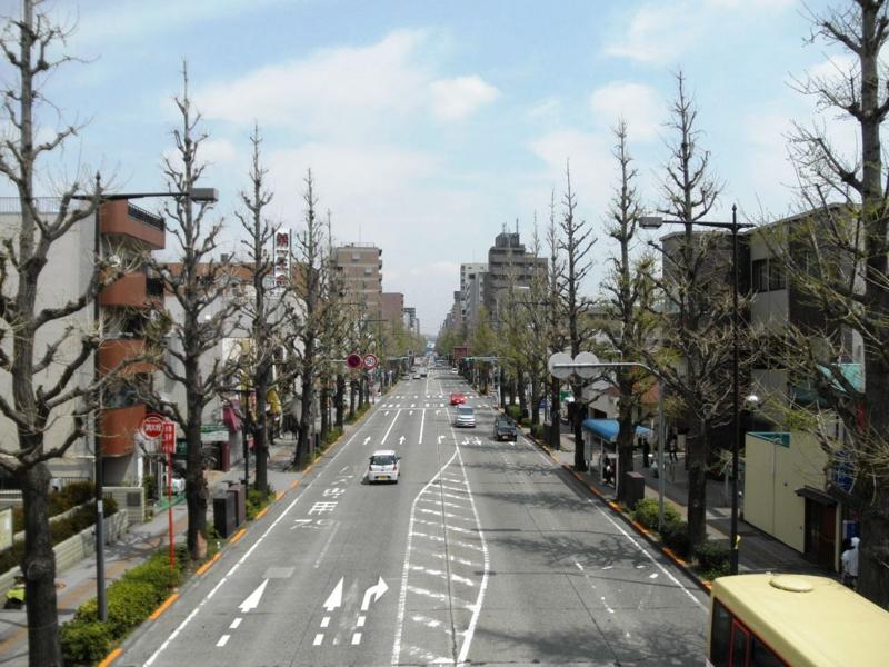 2012/04/17/イチョウ並木
