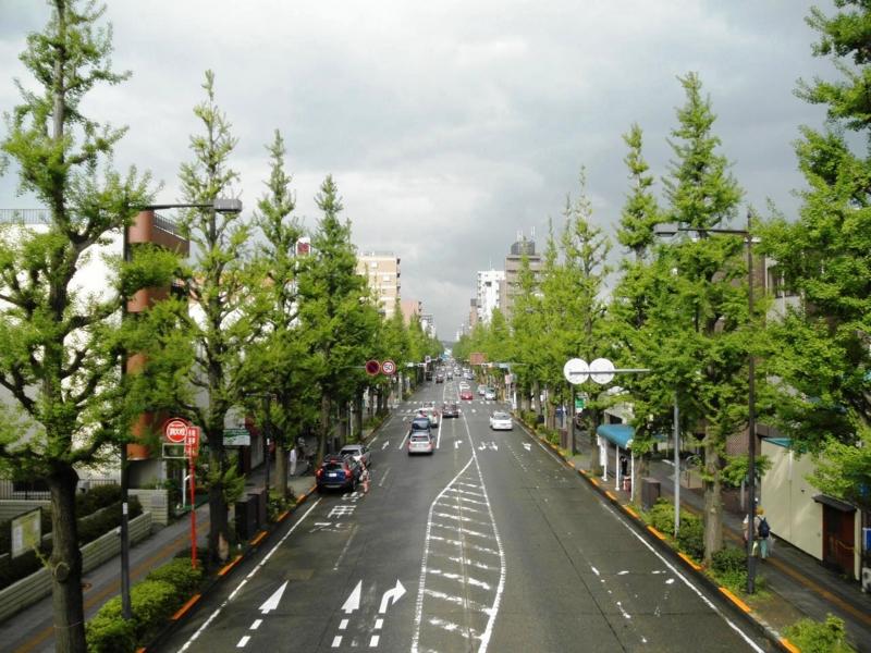 2012/05/01/イチョウ並木