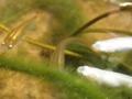 2012/08/01/メダカ2