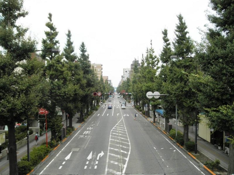 2012/09/05/イチョウ並木