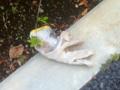 2012/10/22/手袋