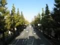 2012/11/07/イチョウ並木