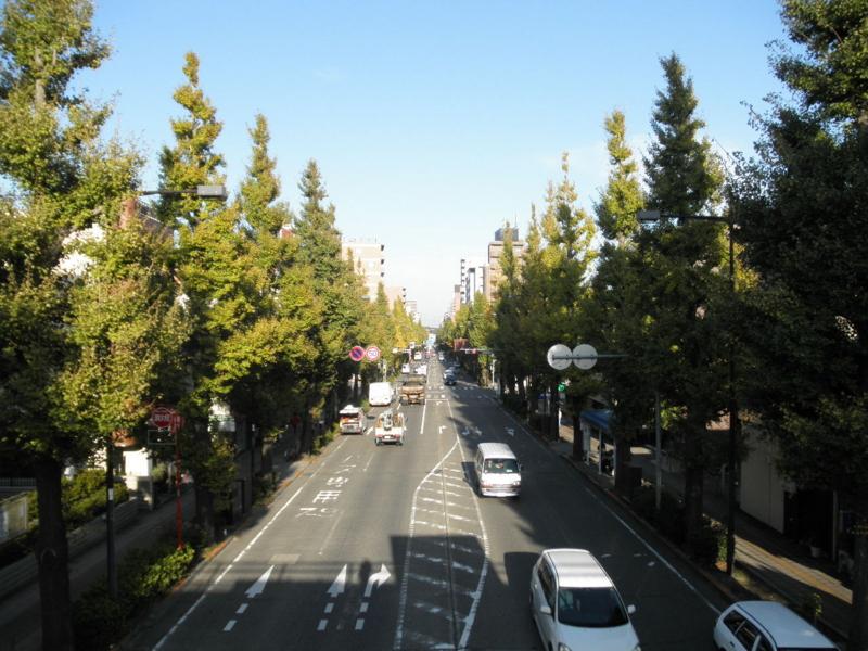 2012/11/08/イチョウ並木