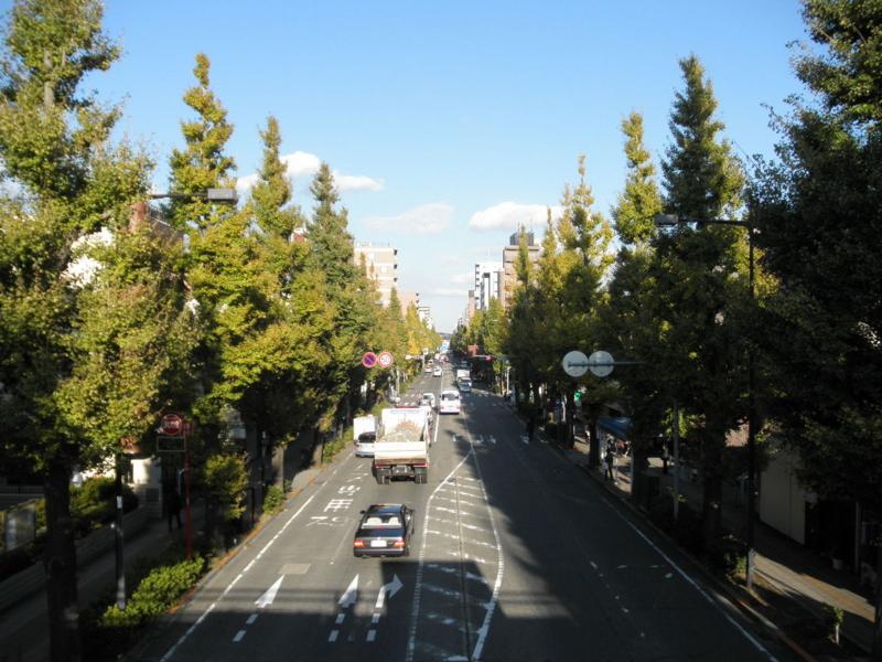 2012/11/09/イチョウ並木