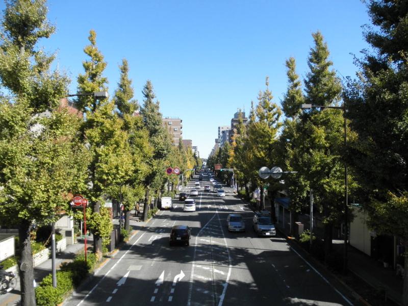 2012/11/10/イチョウ並木