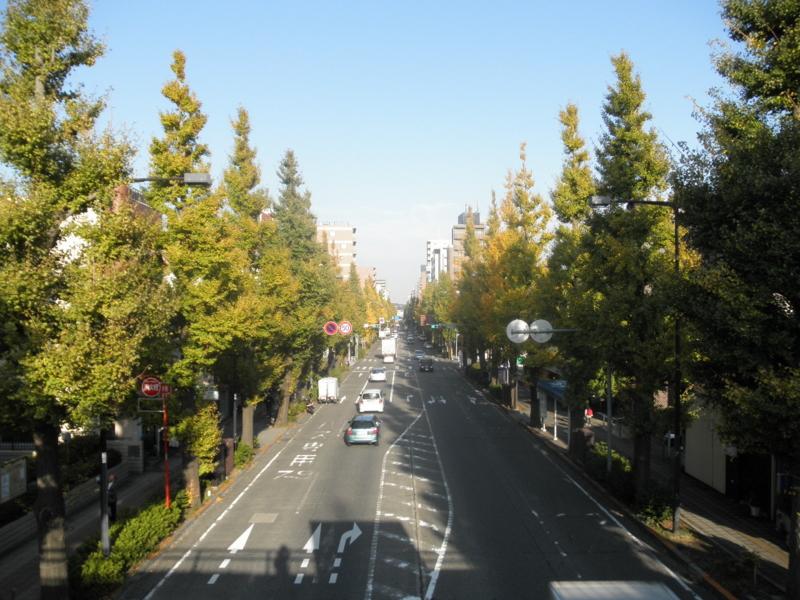 2012/11/13/イチョウ並木
