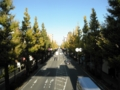 2012/11/14/イチョウ並木