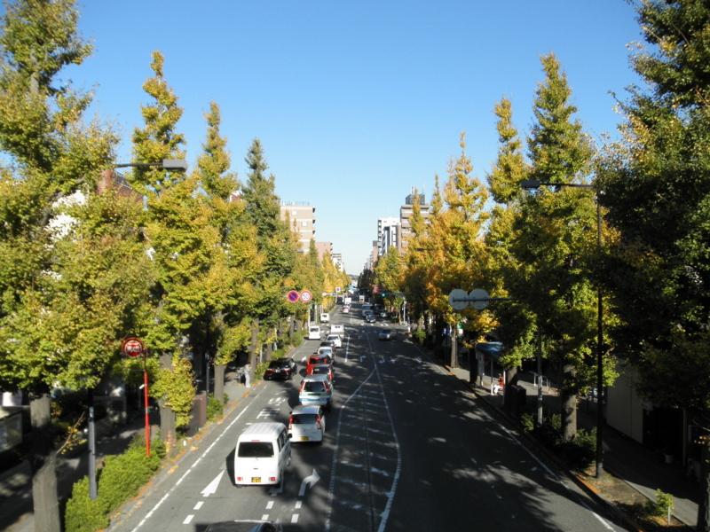 2012/11/16/イチョウ並木