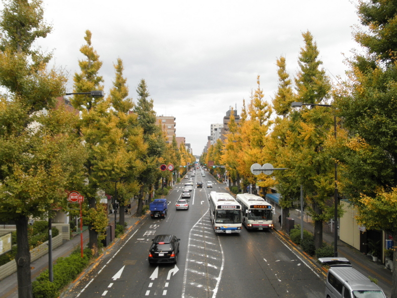 2012/11/17/イチョウ並木
