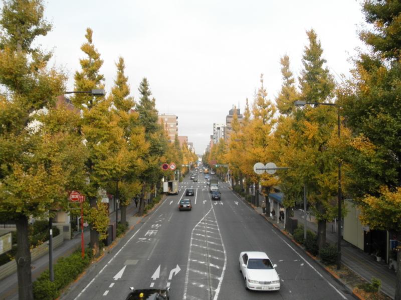 2012/11/19/イチョウ並木