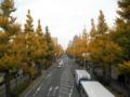 2012/11/22/イチョウ並木