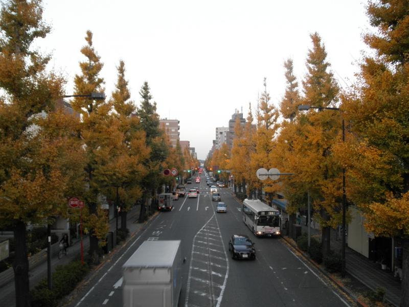 2012/11/24/イチョウ並木