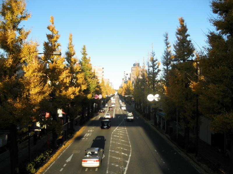 2012/11/27/イチョウ並木