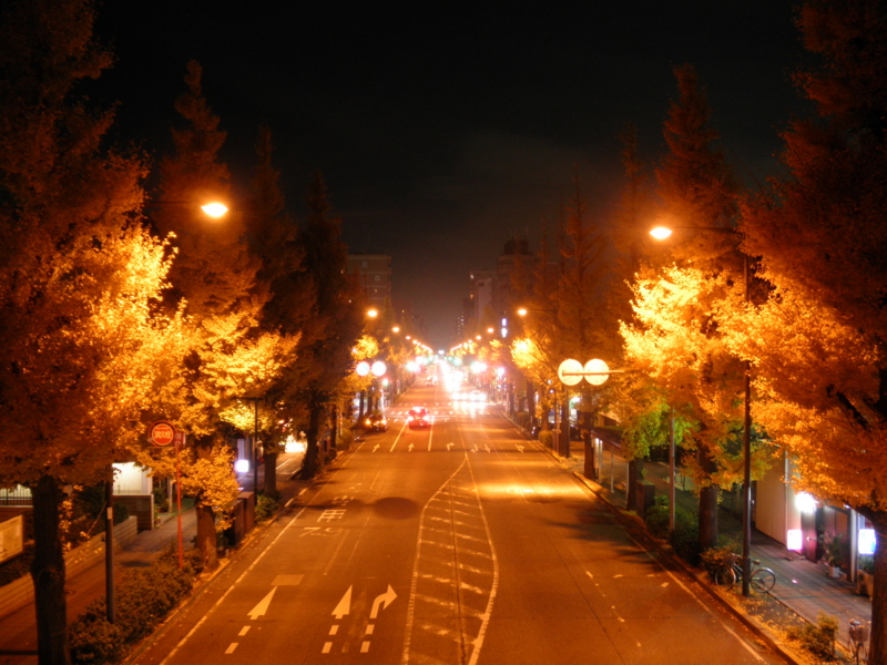 2012/11/28/イチョウ並木