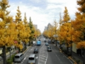 2012/11/29/イチョウ並木