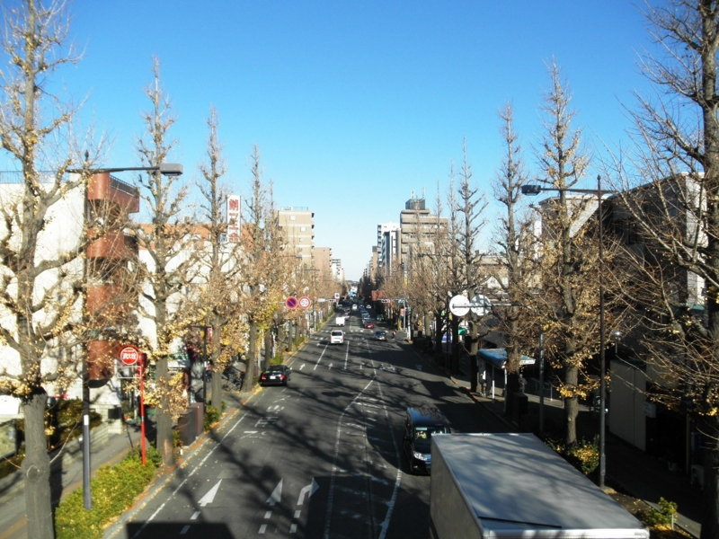 2012/12/13/イチョウ並木