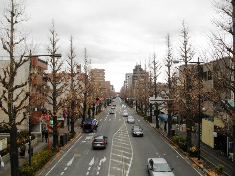 2012/12/18/イチョウ並木