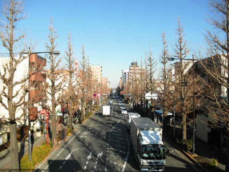 2012/12/25/イチョウ並木