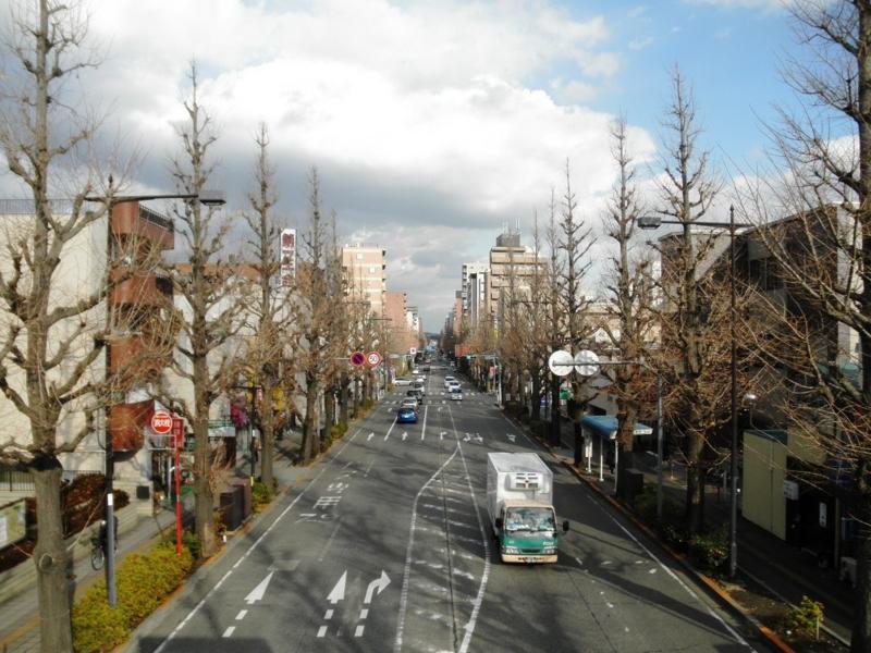 2012/12/31/イチョウ並木