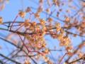 2013/01/27/マユミ?