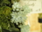 デンドロビウム「Den. leucocyanum 'Lovely'」