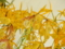 ブラソフロニティス「Bnts. Yellow Bird 'Lemon Drops'」
