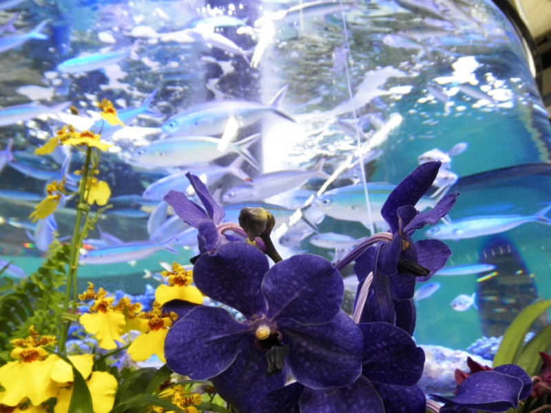 沖縄美ら海水族館1