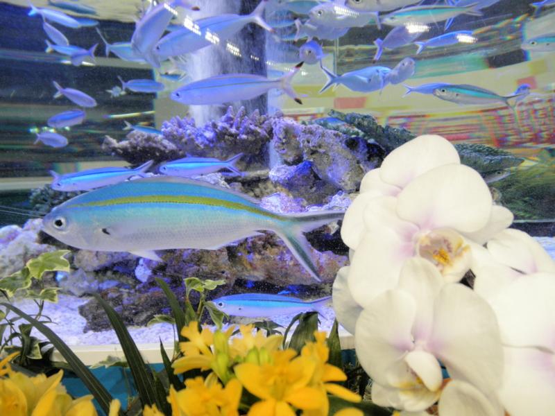 沖縄美ら海水族館3