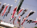 2013/05/04/鯉のぼり2