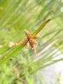 2013/07/16/植物