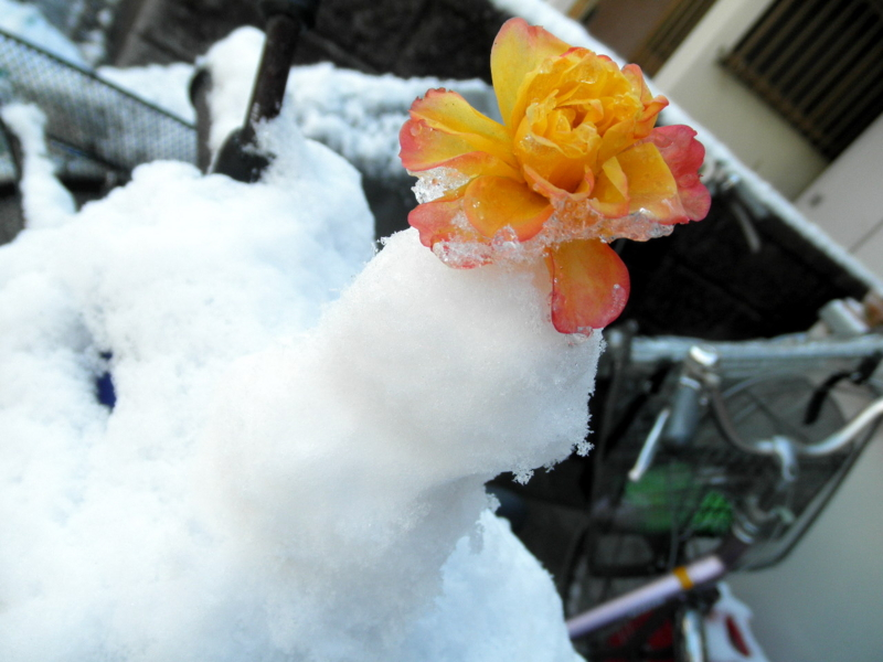 2014/02/05/雪だるま