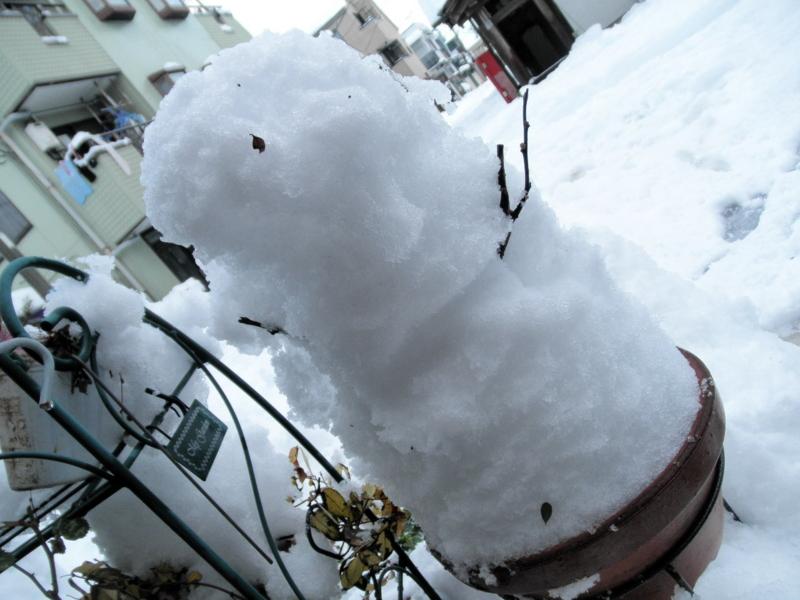 2014/02/09/雪