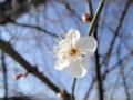 2014/02/21/ウメ2
