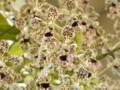 バンダ「V. tricoror  'Delighitful Spring'」