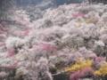 2014/03/29/ウメ1