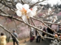 2014/03/29/ウメ4