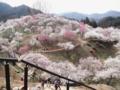 2014/03/29/ウメ7
