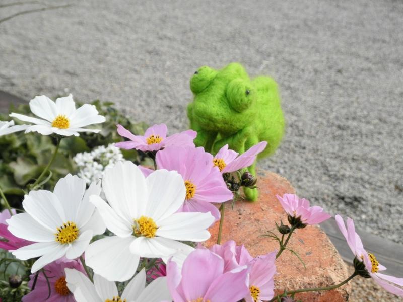 2014/10/18/コスモス&カメレオン