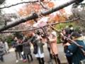 2014/12/06/サクラ「十月桜」