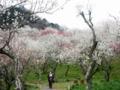 2015/03/29/ウメ7