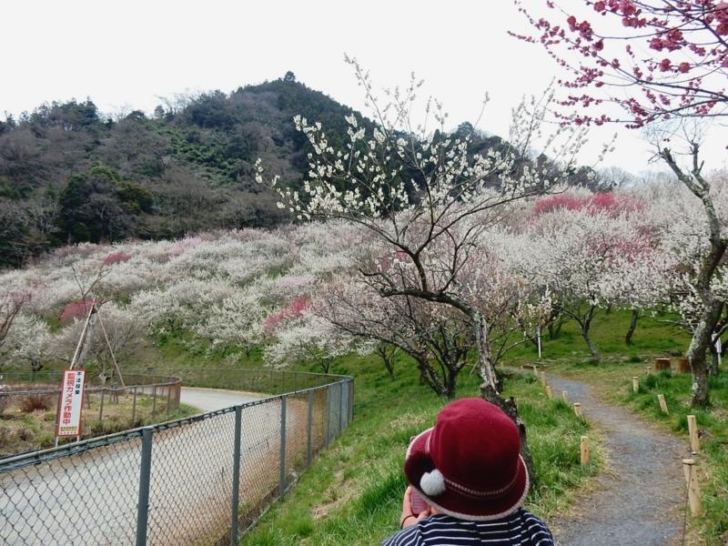 2015/03/29/ウメ8